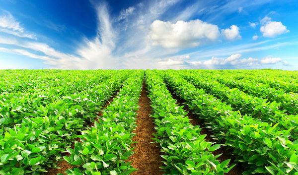 پیشنهاد وزارت اقتصاد برای حذف معافیت مالیاتی بخش کشاورزی