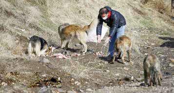 به حیوانات غیرخانگی غذا ندهید!