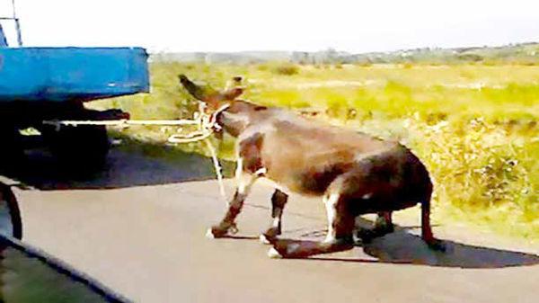 تلاش برای رفع خلأهای قانونی مقابله با حیوانآزاری