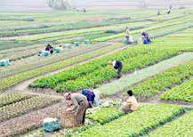 ۶۸درصد چندشغلهها، کشاورزی را به عنوان شغل دوم انتخاب کردهاند