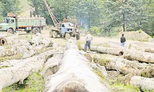 99، برای درختان هم سال سختی بود