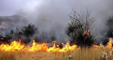 ۱۱۰ هکتار از منطقه حفاظتشده کردستان در آتش سوخت