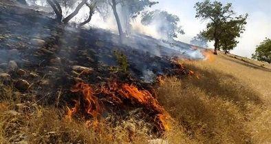 ۳ هکتار از جنگلهای«گِل اِسپید» بویر احمد در آتش سوخت