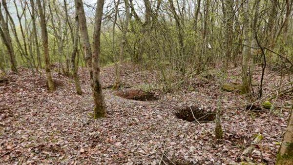 فروش غیرمجاز خاک و چوب جنگلهای شمال