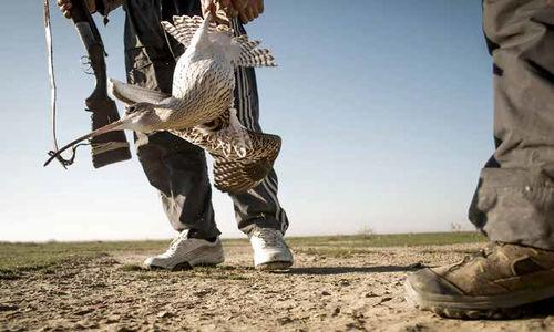 ایران؛ سیاهچال پرندگان مهاجر
