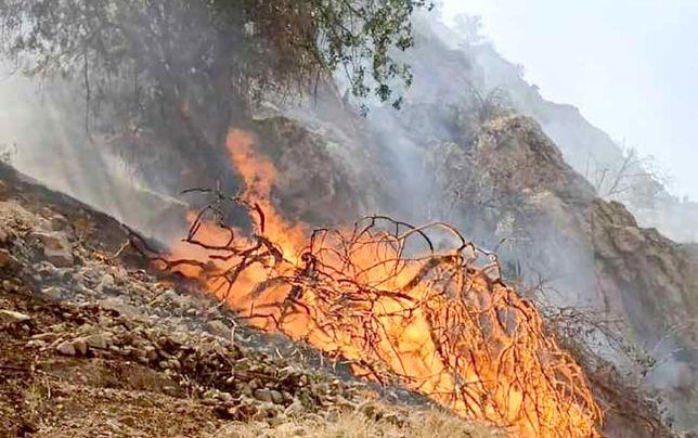 جنگلهای گچساران  همچنان میسوزند