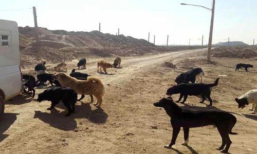 معضلی به نام جمعیت میلیونی سگهای ولگرد