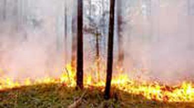 آتشسوزی در۱۱هزار هکتار از جنگلها و مراتع کشور